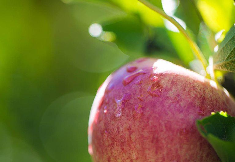 Apple at Woodbrooke