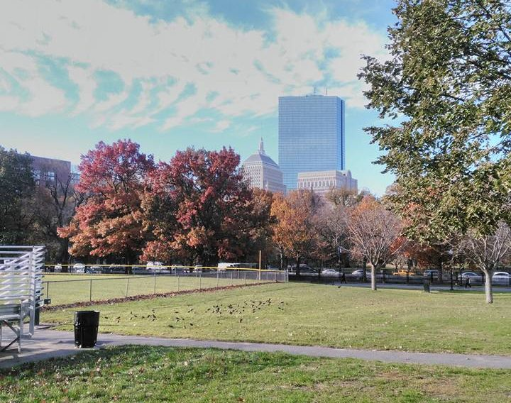 Autumn colour, or as it's known in Boston, fall color.